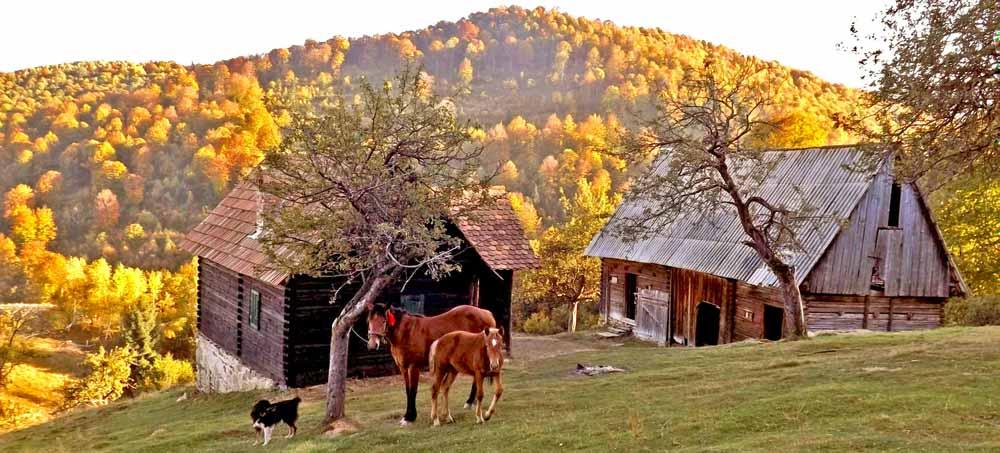 • abgelegene berghütte mieten 2 personen | hüttenurlaub mit hund siebenbürgen