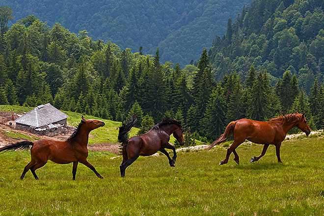 cozo fantu | carpathian log cabins romania holidays transylvania