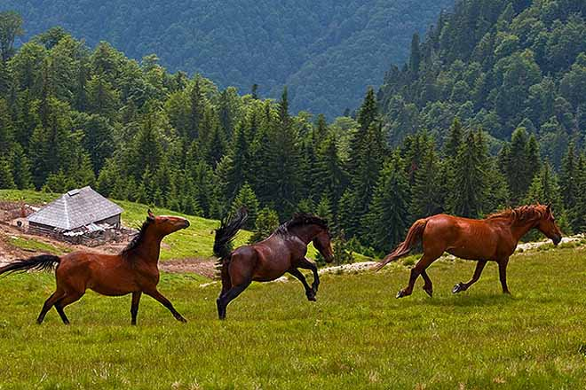 shepherds hut holidays in the carpathian mountains romania