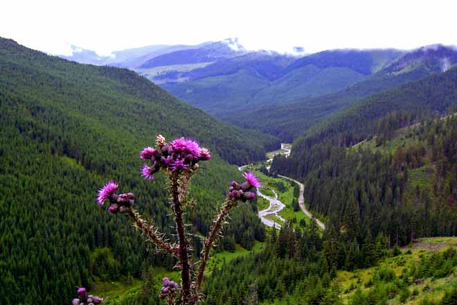 romanian hut to rent, carpathian mountain getaway for hiking in transylvania