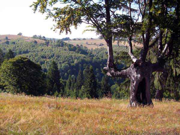 photos of carpathian mountains transylvania hiking