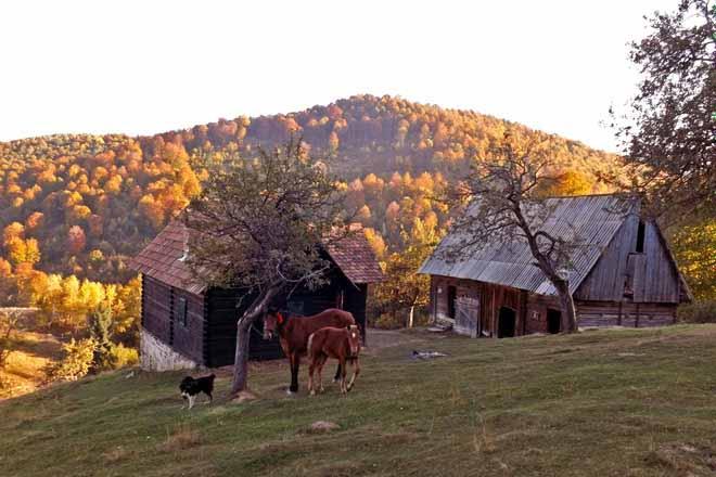 cazare cabana de vacanta transilvania   drumetii munte
