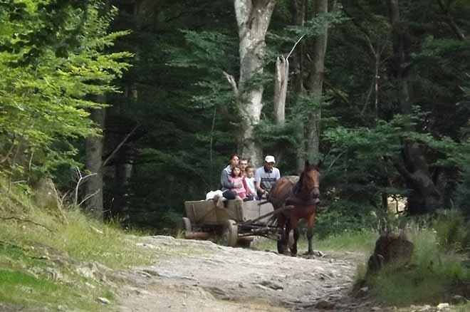 drumetii pe munte | cazare cabana vacanta sibiu