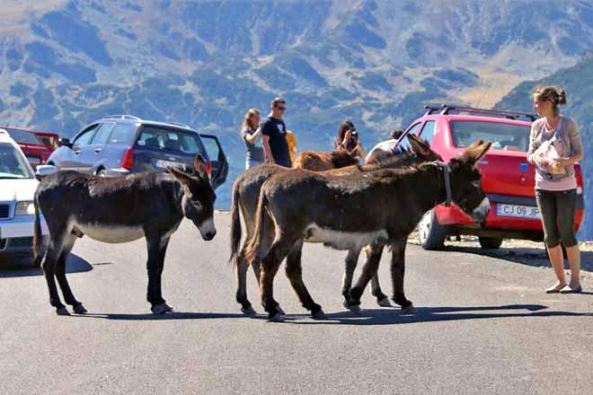 poze transalpina obiective turistice