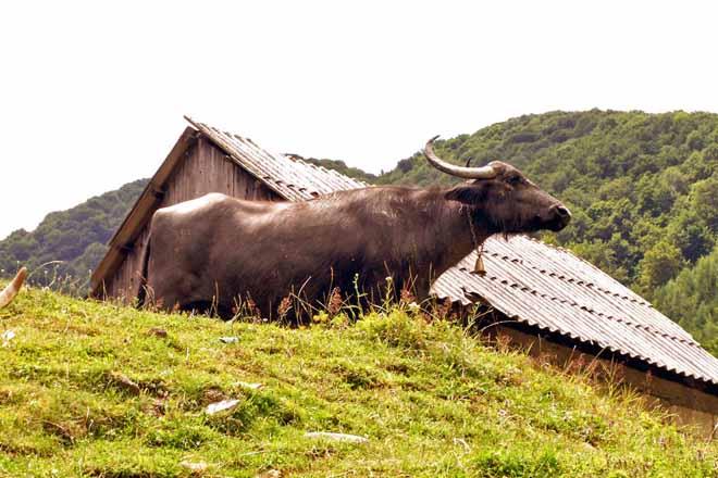 imagini transalpina obiective turistice