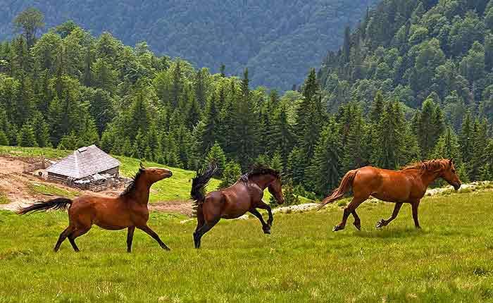on offre cabanes dans les carpates, chalets de montagne en transylvanie, villas de vacances ruraux sibiu.