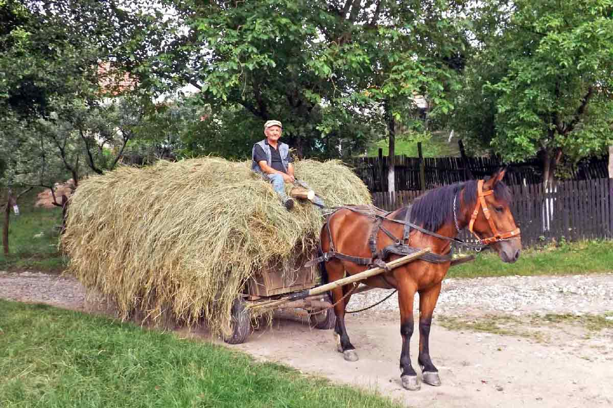 www.casa-vale.net • rumänien-ferienhaus urlaub karpaten