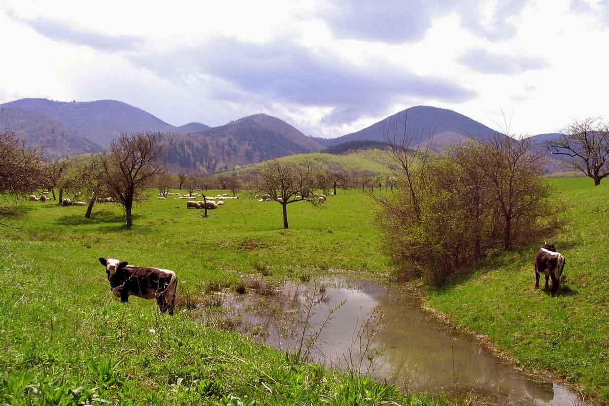 www.casa-vale.net • karpaten-ferienwohnung siebenbürgen-transsilvanien urlaub