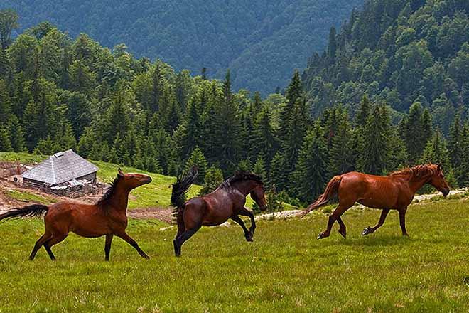 abgelegene selbstversorgerhütte mieten | almwiesen karpaten rumänien bei sibiu