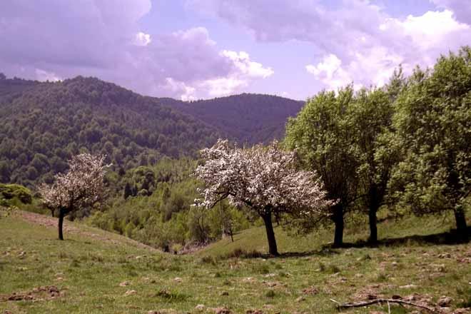 berghüttenurlaub zu mieten | karpaten almhütte ohne komfort in rumänien